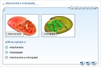 Mitochondrie a chloroplasty